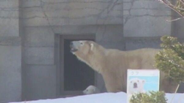 Медвежьи истории: как медвежонок впервые увидел мир