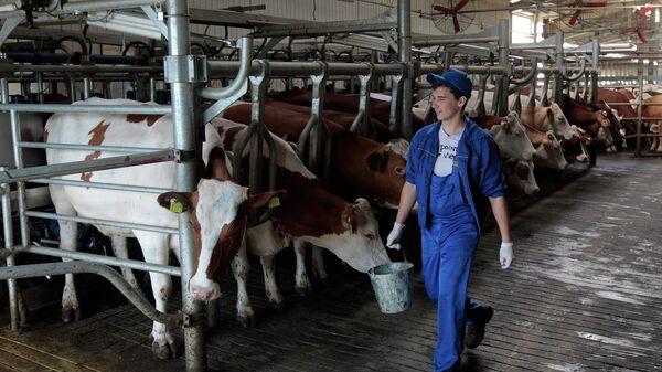 В Приморье фермы за полгода увеличили производство молока на 10%