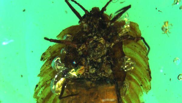 Фотография мезозойской щитовки с потомством на ее брюхе, найденной в бирманском янтаре