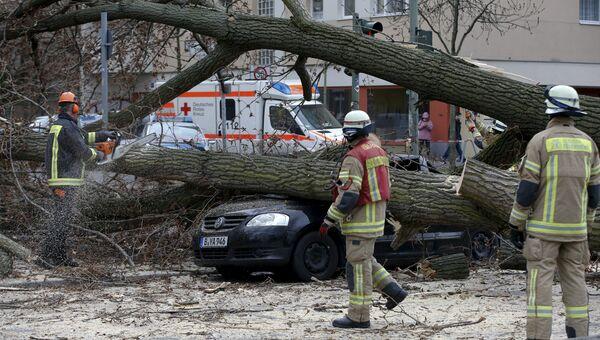 Последствия урагана Никлас в Берлине