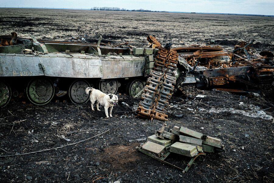 Поле с разрушенными танками около города Дебальцево