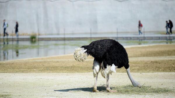 Страус в Венсенском зоопарке, Париж