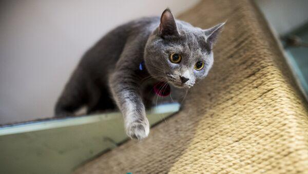 Кошка в котокафе Котики и люди в Москве
