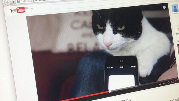 Страница сайта YouTube с кадром из видео с кошкой Мерлин, попавшей в книгу рекордов Гиннесса