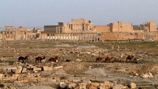 Город Пальмира в Сирии. Архивное фото