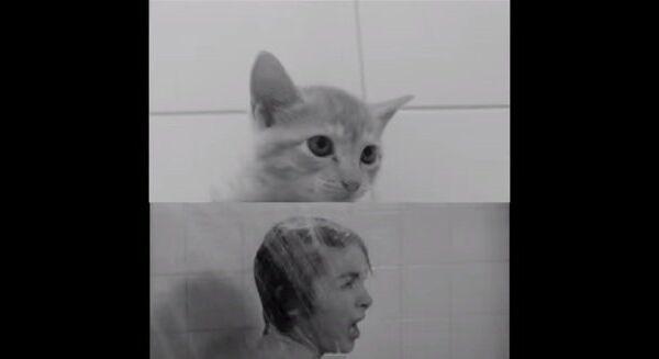 Любителям Хичкока посвящается: Психо по-кошачьи