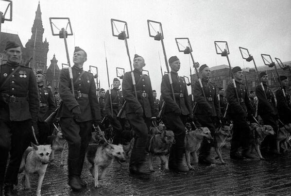 Минеры с собаками минно-розыскной службы на Параде Победы на Красной площади 24 июня 1945 года