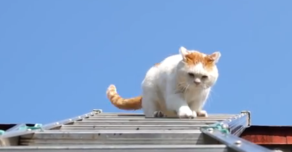 Аккуратно, шаг за шагом, или Как кот справился с лестницей