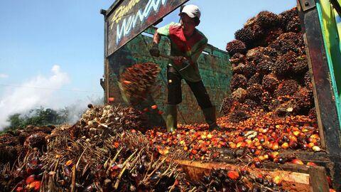 Разгрузка сырья на предприятии по производству пальмового масла
