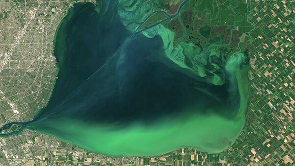 Цветение водорослей в американском озере Эри