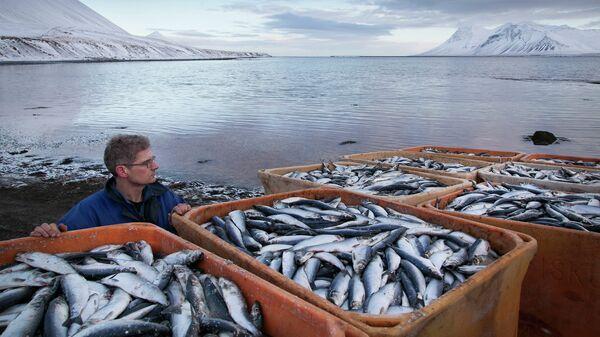 Рыбный промысел. Архивное фото