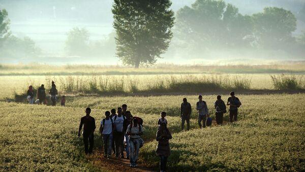 Беженцы идут по полю в сторону границы с Македонией возле деревни Идомени, Греция. Август 2015