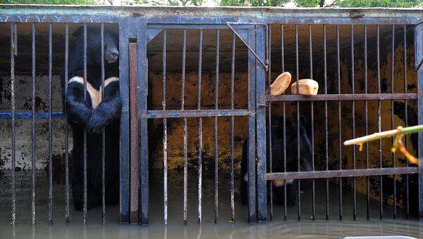Уссурийский зоопарк после наводнения. Архивное фото