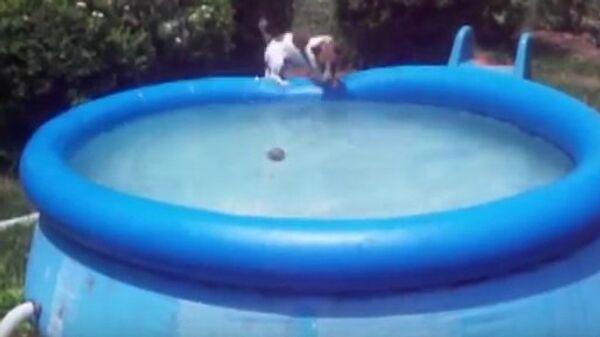 Плавающие собаки