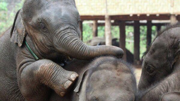 Слонята в питомнике