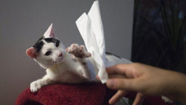 Кафе The Cat's Meow в Бруклине