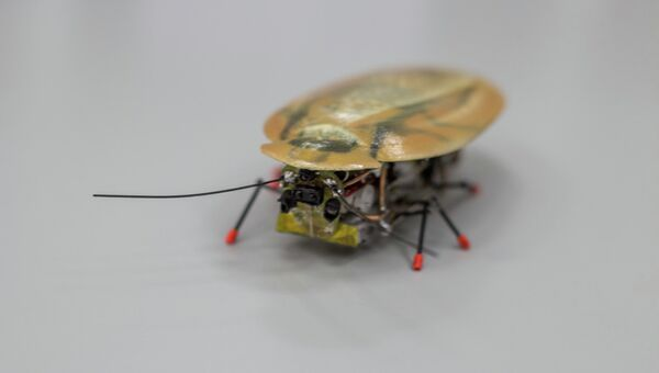 Робот-таракан, созданный учеными Балтийского федерального университета имени Иммануила Канта
