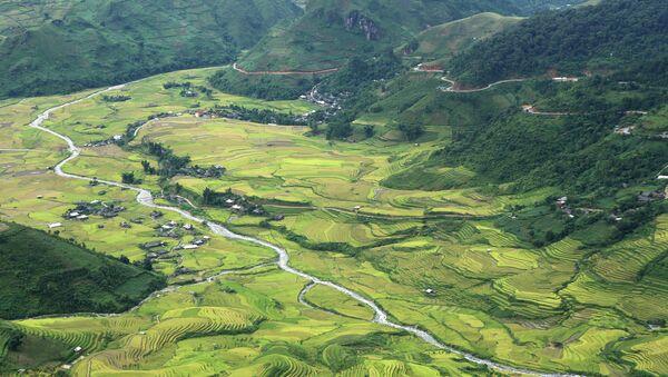 Рисовые поля. Архивное фото