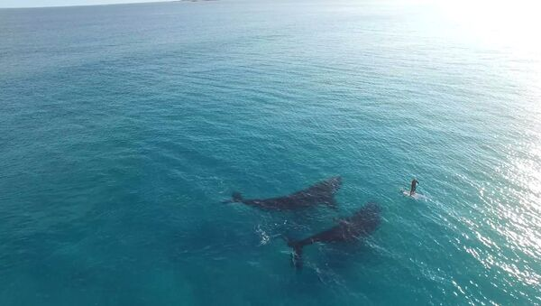 Романтика больших китов