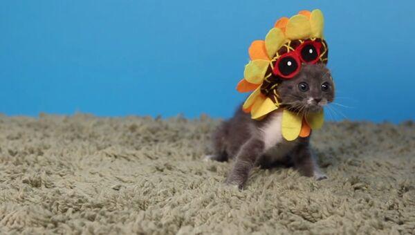 Маленькое представление: котята и шляпы