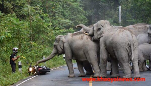 Слоны не так уж безобидны