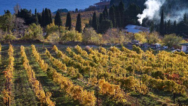 Вид на виноградники и берег Черного моря в окрестностях большой Ялты в селе Бекетово в Крыму