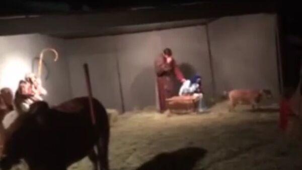 Коза сорвала рождественский спектакль