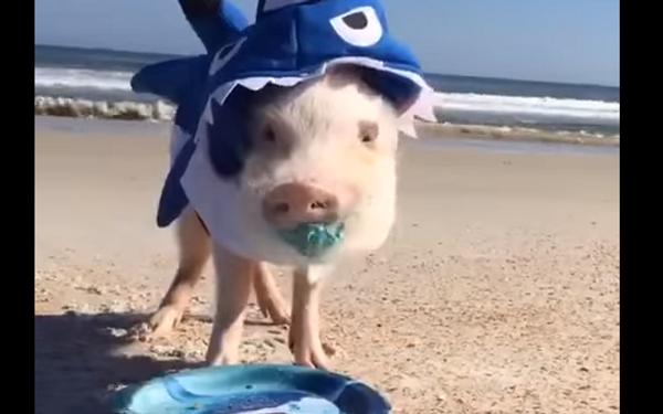 Жутко милая акула
