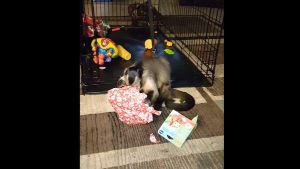 Много подарков для маленькой обезьянки