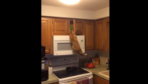 От этого кота еду точно не спрячешь