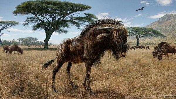 Древнее животное Rusingoryx atopocranion, найденное в Кении