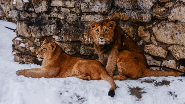 Звери в московском зоопарке. Архивное фото