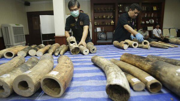 Бивни слонов, изъятые у контрабандистов. Архивное фото