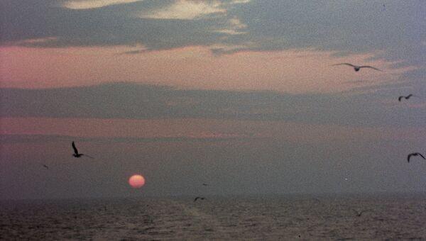 Чайки над Балтийским морем