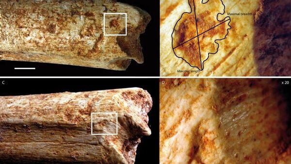 Кости человека из Марокко, съеденного гиеной 500 тысяч лет назад