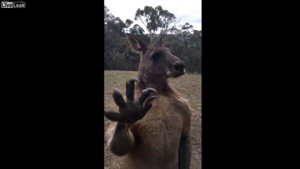 Зачем австралийцам крепкие стекла