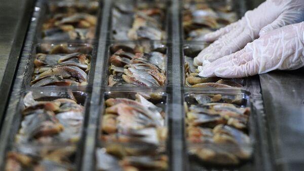 Сотрудница предприятия по переработке рыбы Русская рыбная фактория укладывает рыбу в контейнеры для дальнейшей упаковки