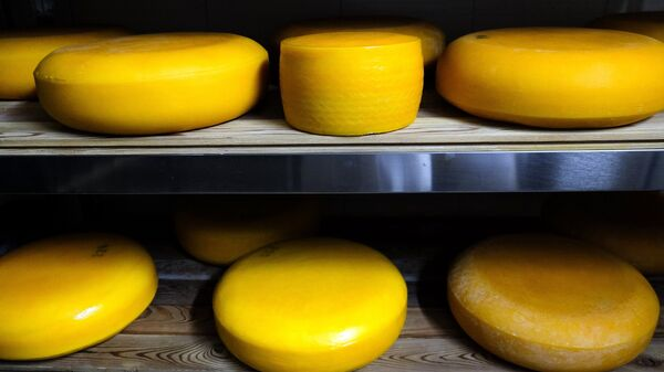 Производство сыра в Краснодарском крае