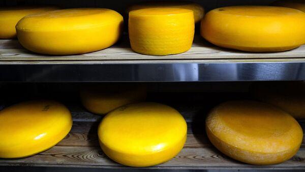 Производство сыра Камамбер в Краснодарском крае. Архивное фото