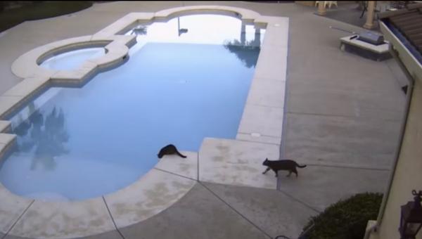 Пора купаться!