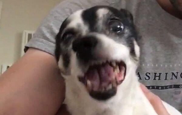Уморительно чихающая собака