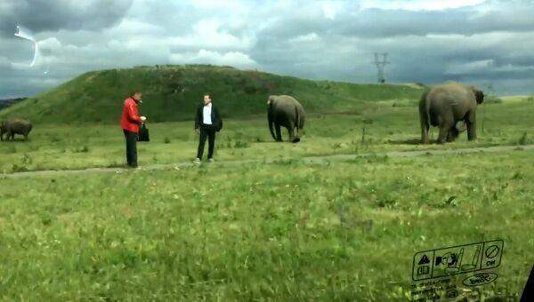 Россия – родина слонов
