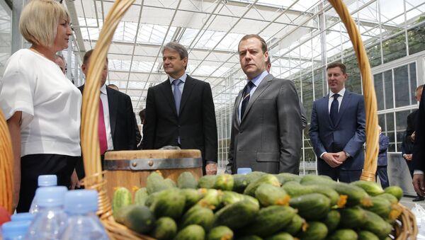 Дмитрий Медведев во время посещения сельскохозяйственного предприятия Матвеевское