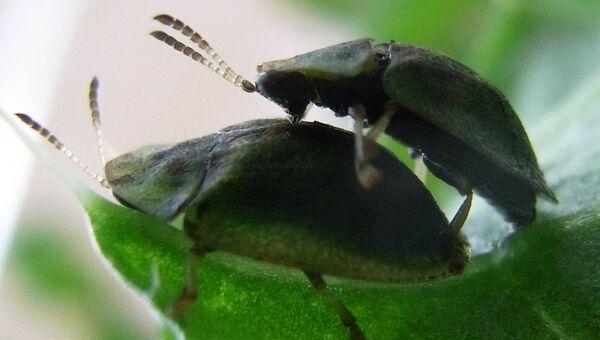 Позиция в сексе называется пчелка