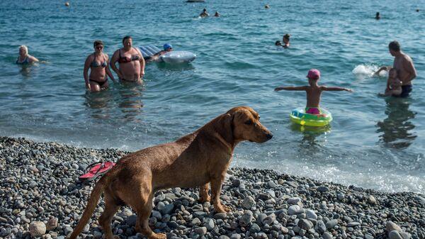 Собака на пляже около Олимпийского парка в Сочи