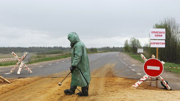 Вспышка африканской чумы свиней в Новгородской области