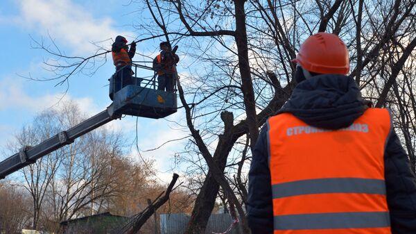 Сотрудники коммунальных служб обрезают деревья в районе Ново-Переделкино