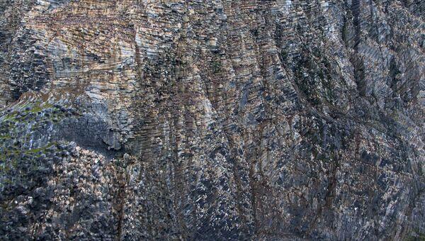 Скала Рубини, птичий базар, Земля Франца-Иосифа, национальный парк Русская Арктика