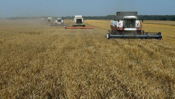 Уборка урожая зерновых культур в России. Архивное фото