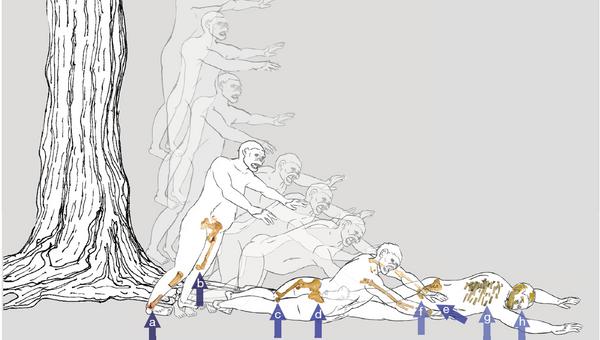 Схема падения Люси с дерева